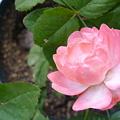 Photos: 2011.11 garden 076