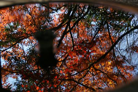 雨水鉢の中の紅葉!(111210)