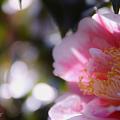 Photos: Hikarugenji