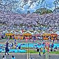 岡山 桜まつり