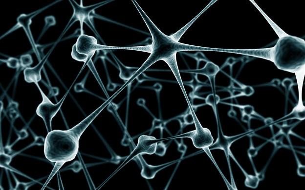 Photos: Neuron