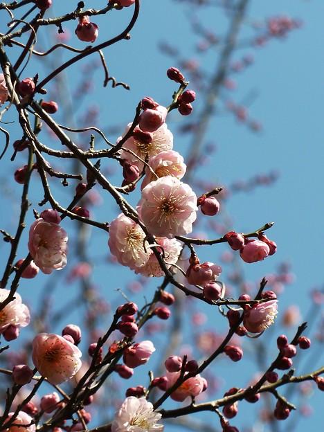 写真: ~春爛漫~