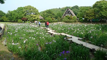 宮地嶽神社の花菖蒲2011(1)