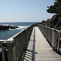 写真: IMG_6903神津島__天上山登山と島巡り