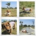 写真: 20111008 お散歩1