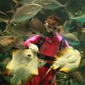 Photos: マリンガールの餌付けショー(1)  のとじま水族館