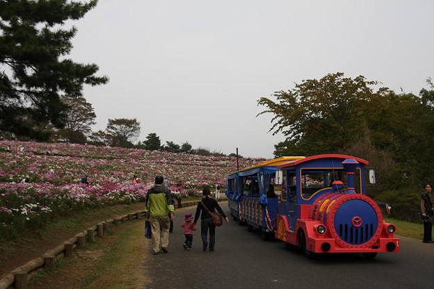 Photos: ママァ~お花がいっぱいでしゅ