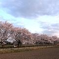 写真: RIMG120412_038