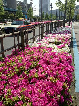 ドナウ通りのつつじ(2012/5/7)