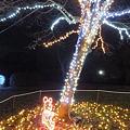 昭和記念公園のイルミネーション#10