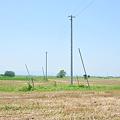 <収穫後の麦畑(2)>