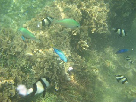 アルパット島近くで熱帯魚その03