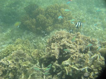 アルパット島近くで熱帯魚その19