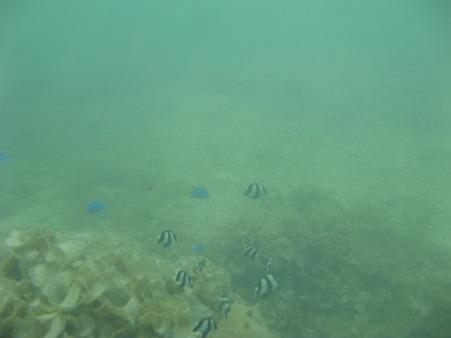 相方撮影の熱帯魚10