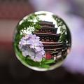 花玉紫 -塔-